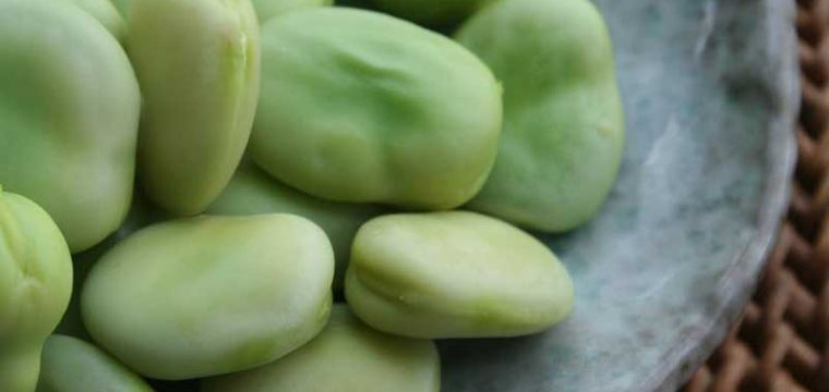 Broad Bean Aquadulce